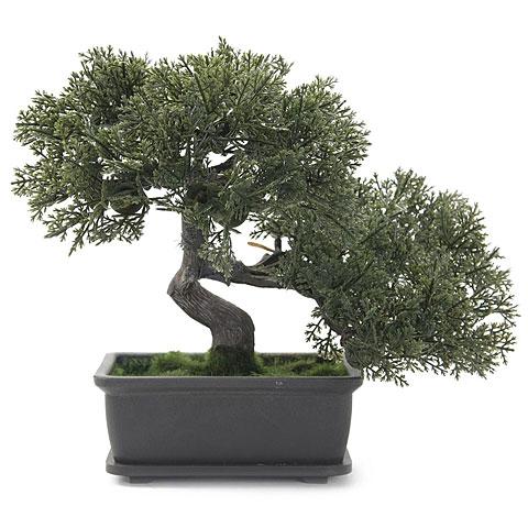 Europalms Bonsai, 21cm